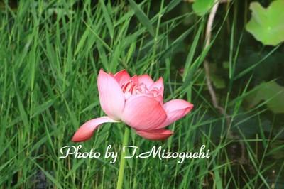 IMG_2603.jpg