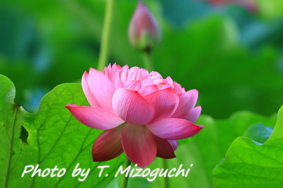 IMG_3301.jpg