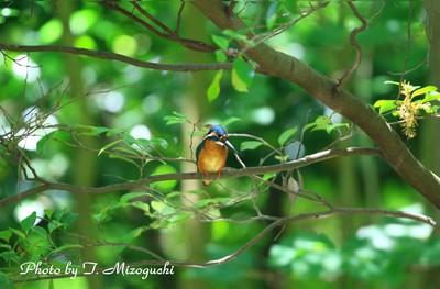 s-IMG_1282.jpg